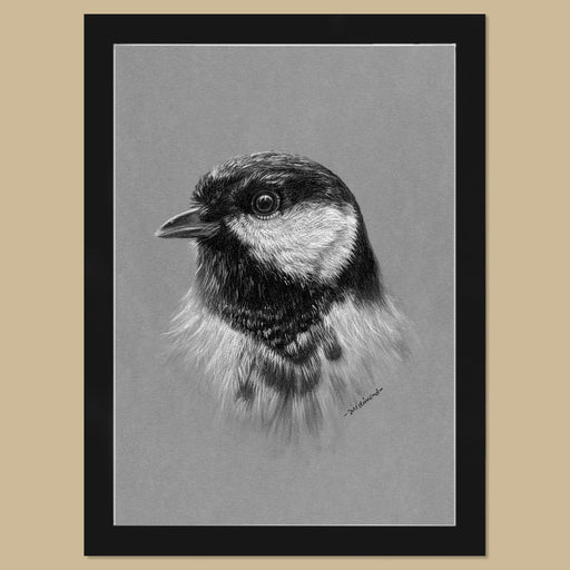 Original Great Tit Charcoal Drawing - The Thriving Wild