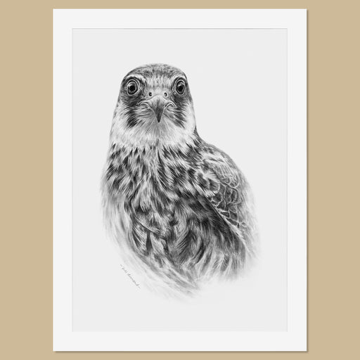 Original Hobby Pencil Drawing - The Thriving Wild
