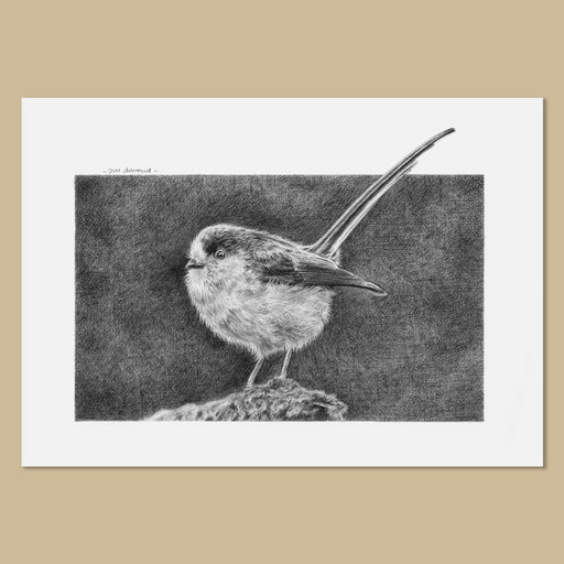 Original Long-Tailed Tit Pencil Drawing - The Thriving Wild-