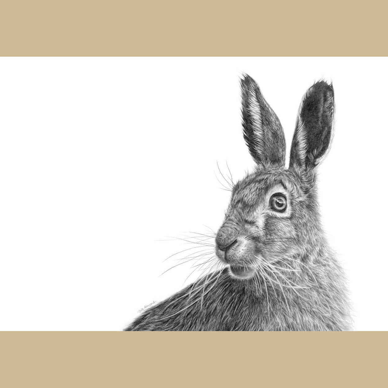 Original March Hare Pencil Drawing Wildlife - The Thriving Wild - Jill Dimond