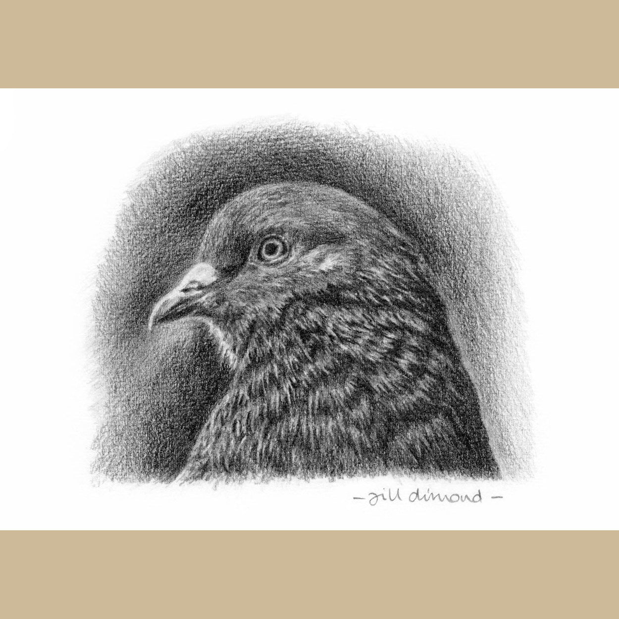 Original Pigeon Graphite Drawing - The Thriving Wild - Jill Dimond