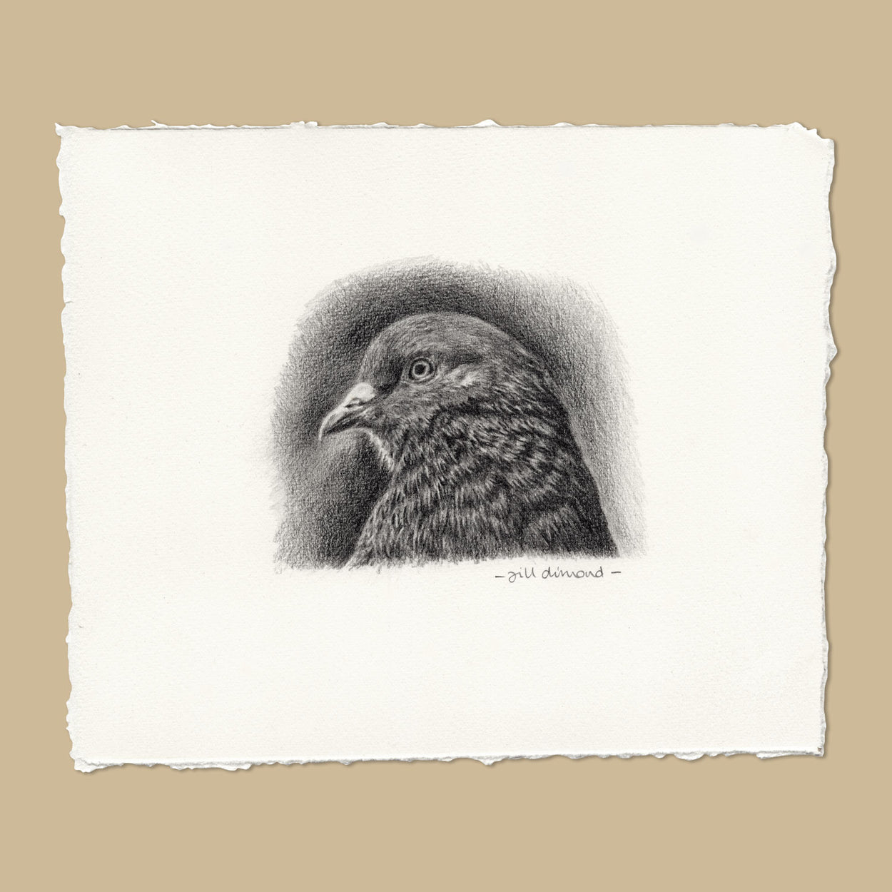 Original Pigeon Pencil Drawing - The Thriving Wild