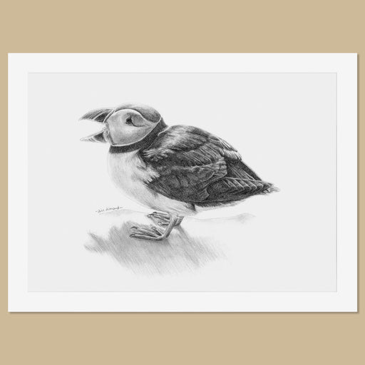 Original Puffin Pencil Drawing - The Thriving Wild - Jill Dimond