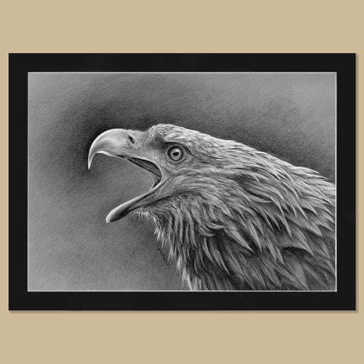 Original White-Tailed Eagle Charcoal Drawing - The Thriving Wild - Jill Dimond