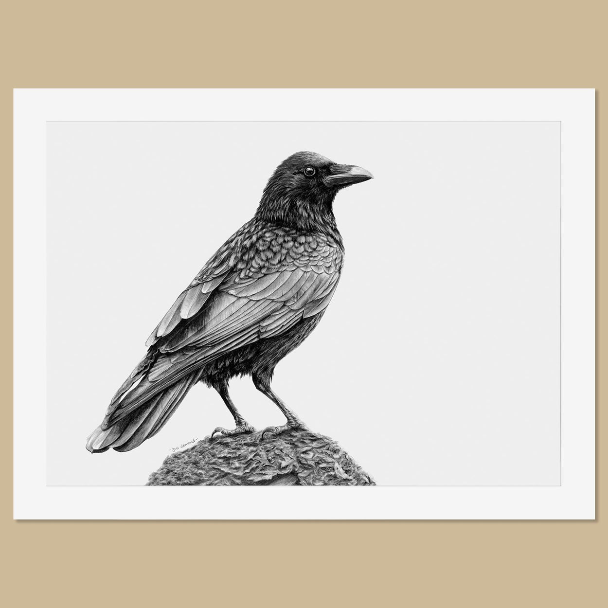 Original Crow Pencil Drawing - The Thriving Wild