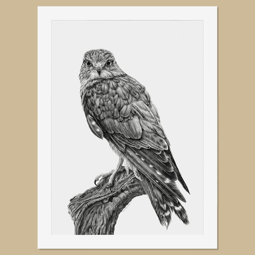 Original Female Merlin Pencil Drawing - The Thriving Wild