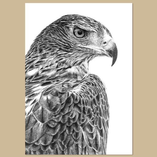 Original Golden Eagle Pencil Drawing - The Thriving Wild