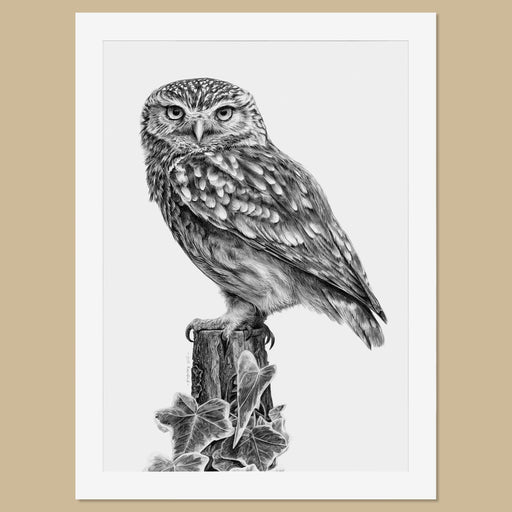 Original Little Owl Pencil Drawing - The Thriving Wild