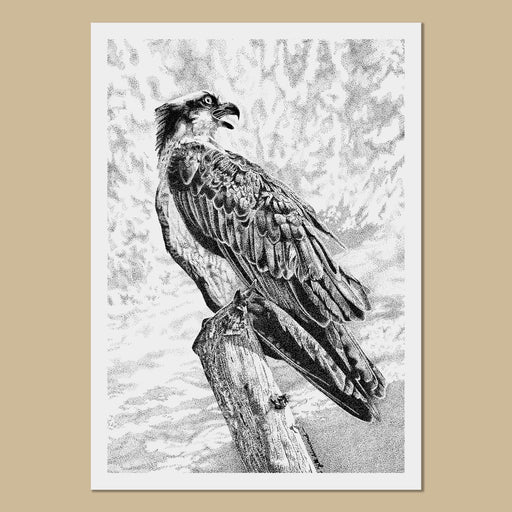 Osprey Art Prints - The Thriving Wild