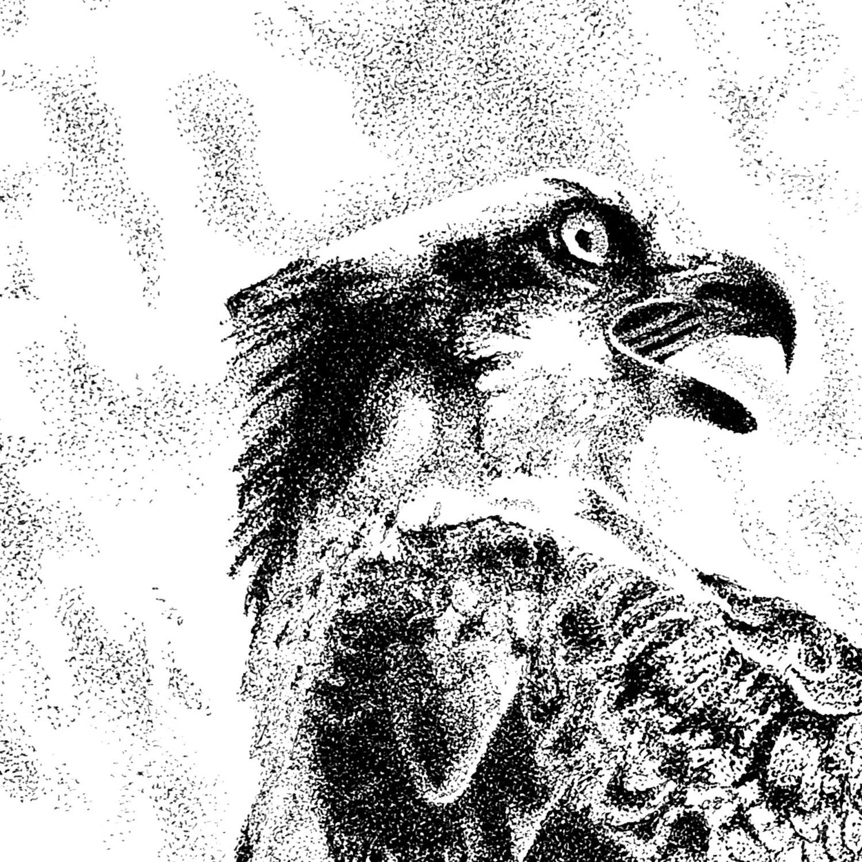Osprey Pen Stippling Close-up - The Thriving Wild