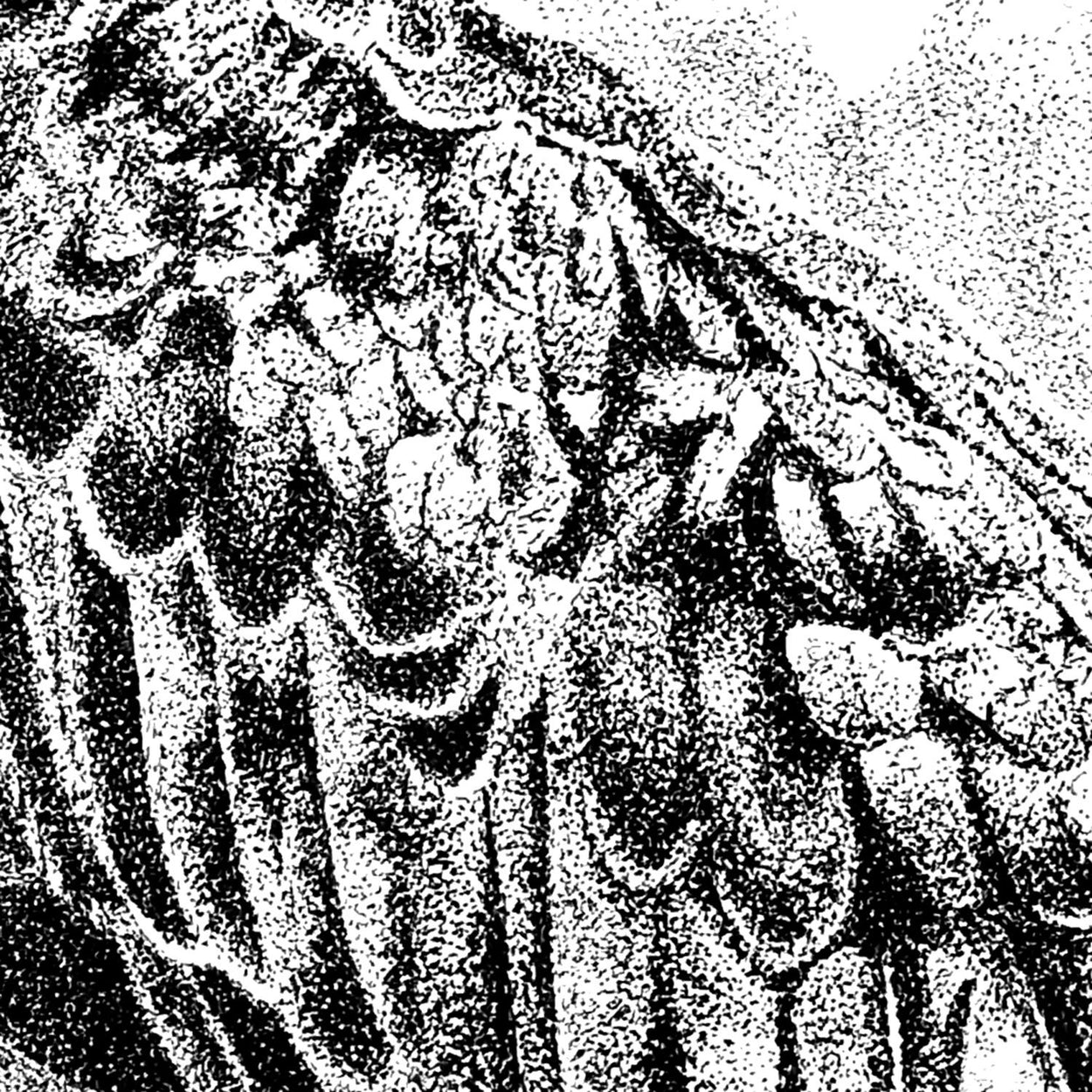 Osprey Wing Close-up Pen Drawing - The Thriving Wild