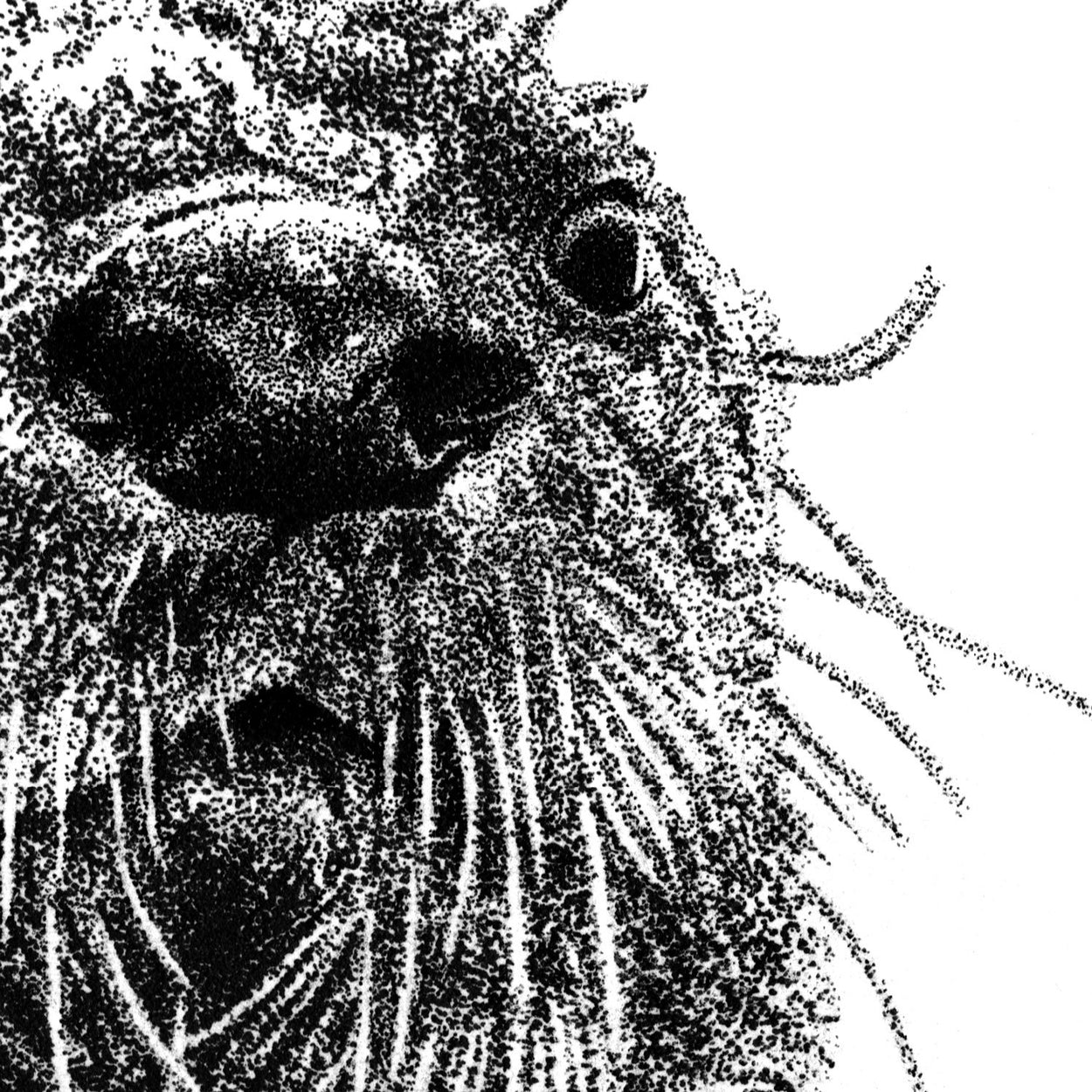 Otter Face Pen Drawing - The Thriving Wild