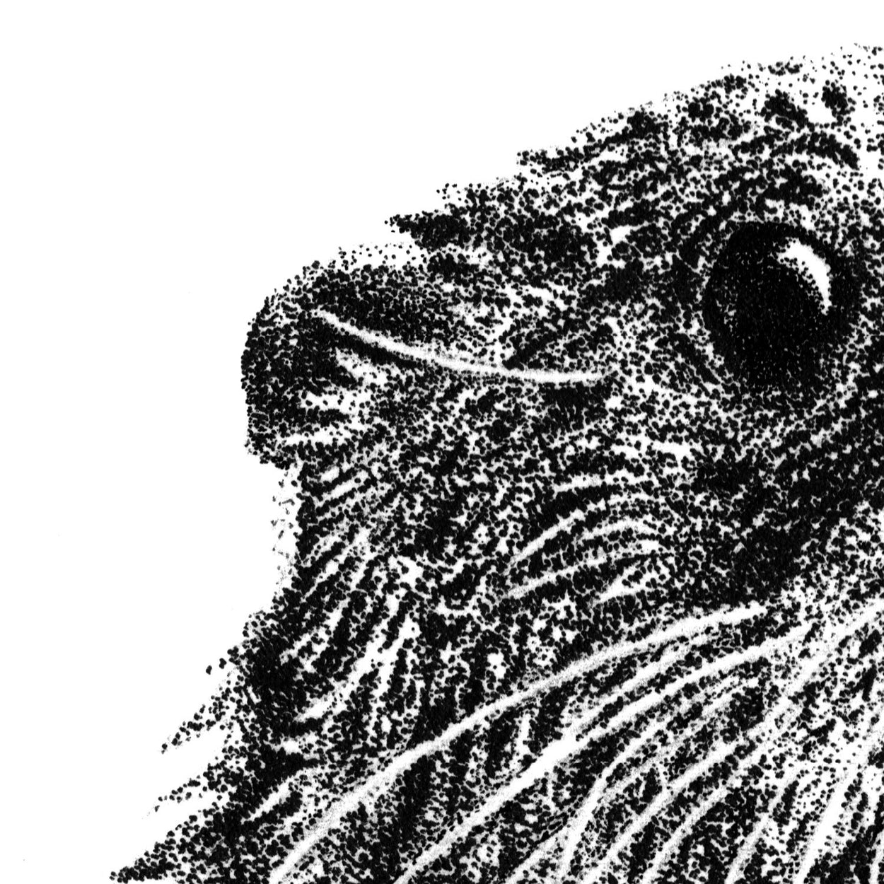 Otter Pen Stippling Close-up - The Thriving Wild