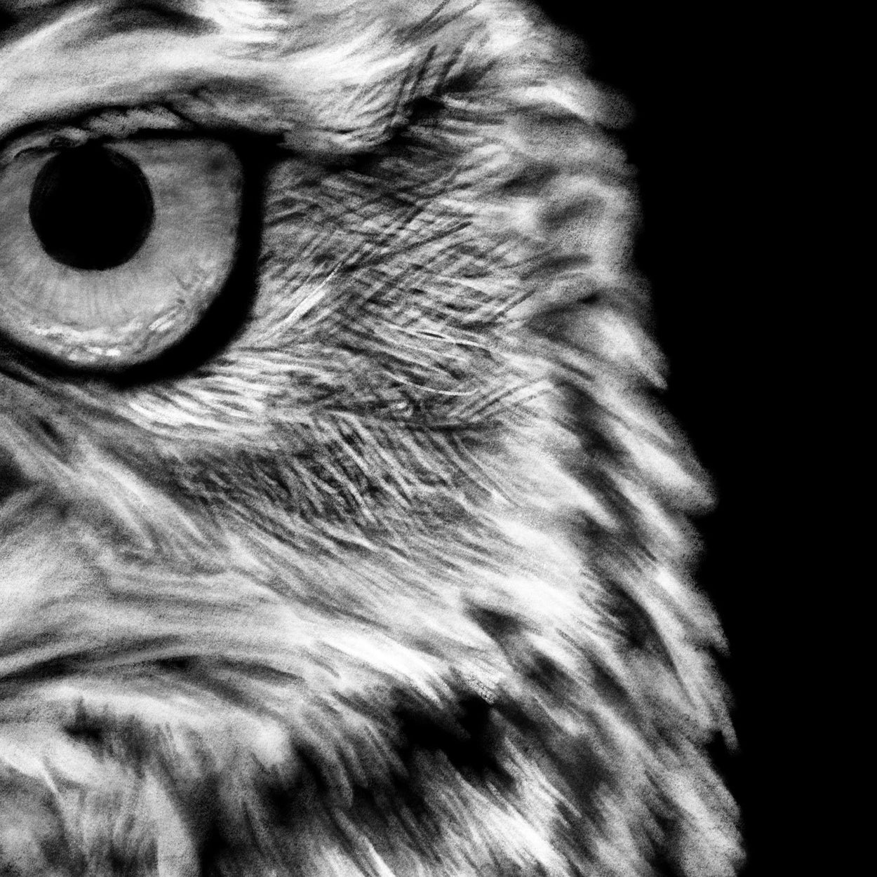 Owl Bird Procreate Digital Drawing Close-up - The Thriving Wild