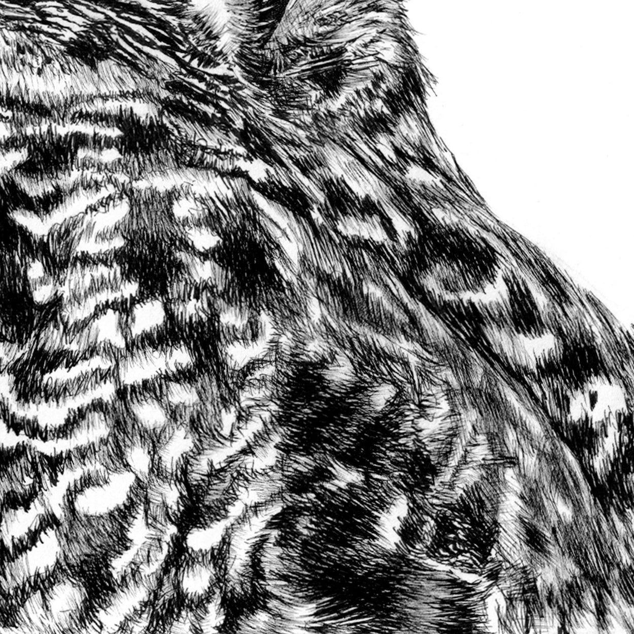 Owl Pen Drawing Close-up - The Thriving Wild