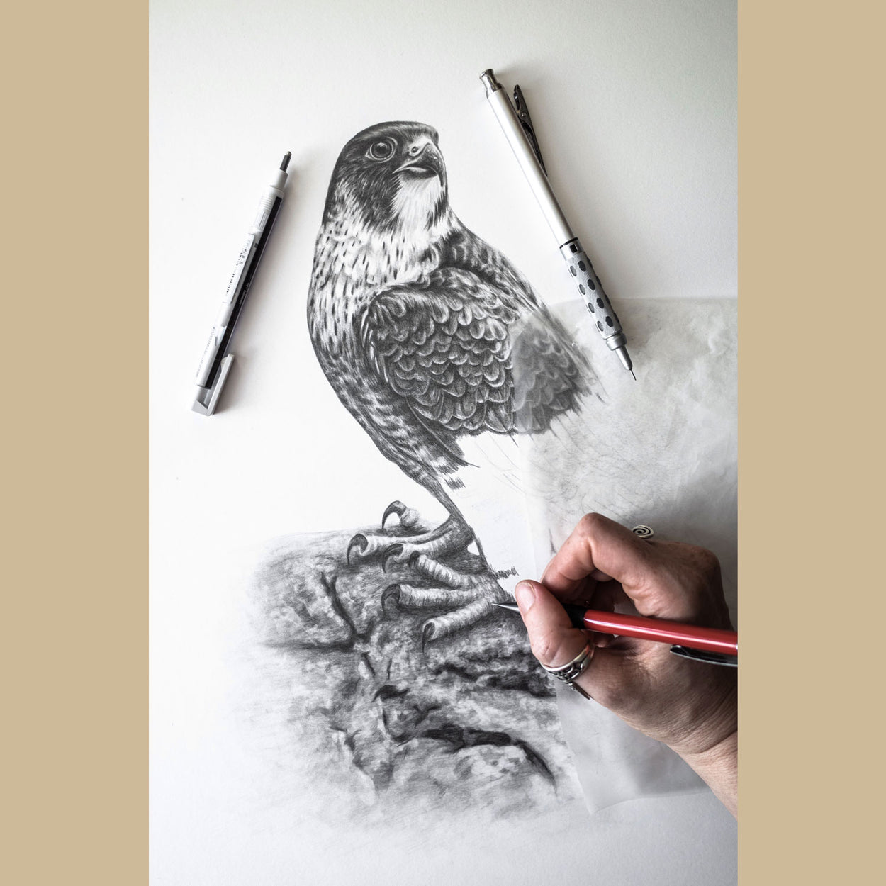 Peregrine Bird of Prey Drawing Work in Progress - The Thriving Wild