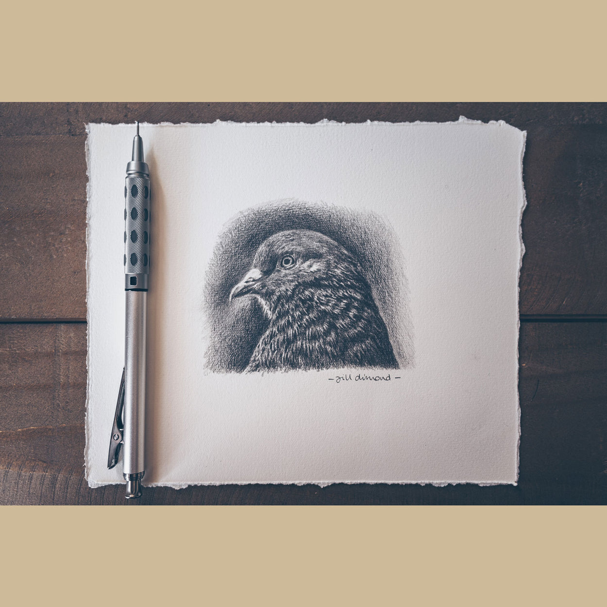 Pigeon Drawing on Table - The Thriving Wild