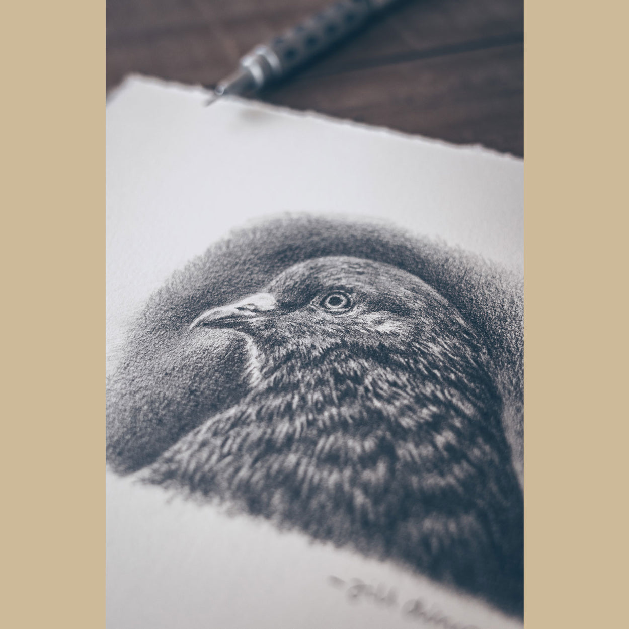 Pigeon Pencil Drawing - The Thriving Wild