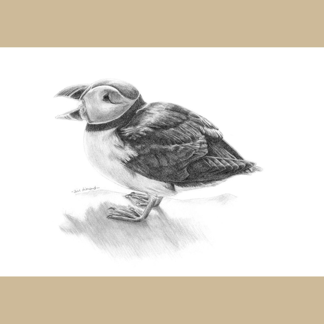 Puffin Graphite Drawing - The Thriving Wild - Jill Dimond