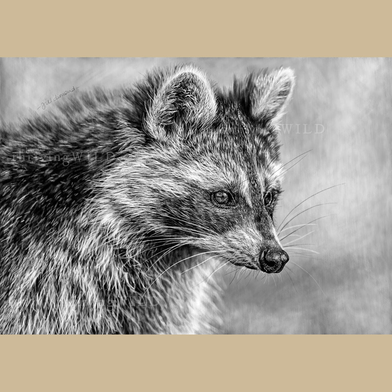 Raccoon Wildlife Digital Procreate Drawing - The Thriving Wild