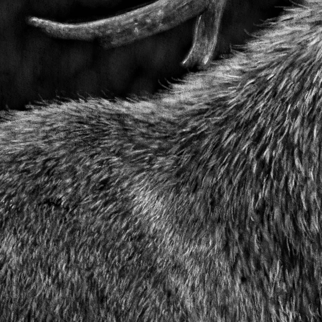 Red Deer Digital Drawing Close-up - The Thriving Wild