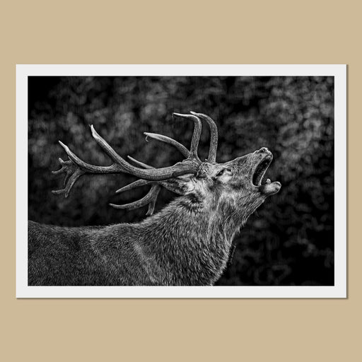 Red Deer Stag Art Prints - The Thriving Wild