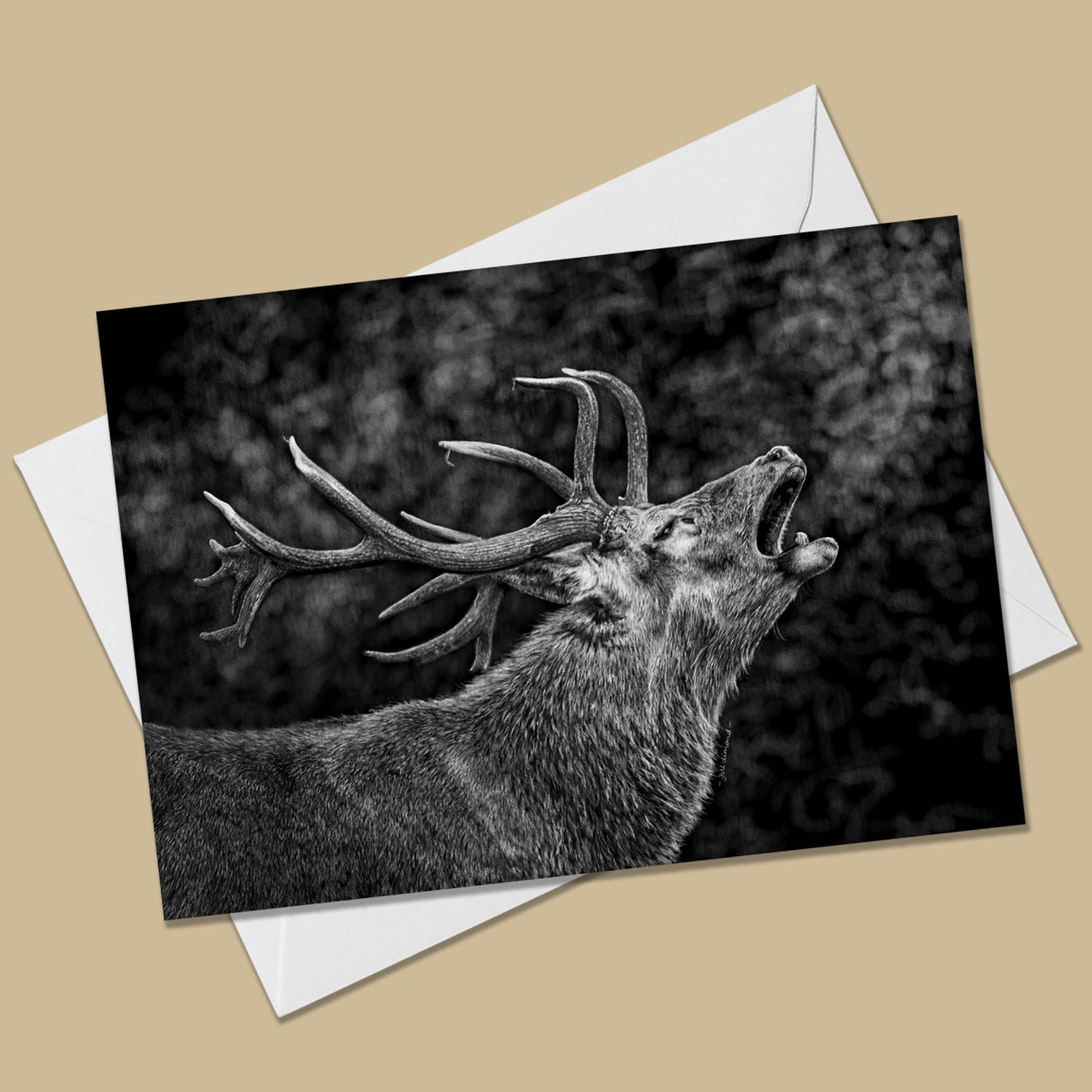 Red Deer Stag Greeting Card - The Thriving Wild