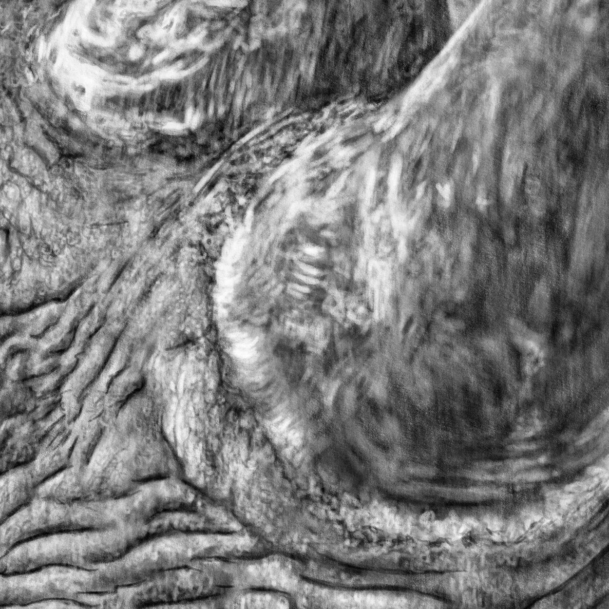 Rhino Digital Drawing Procreate Close-up - The Thriving Wild