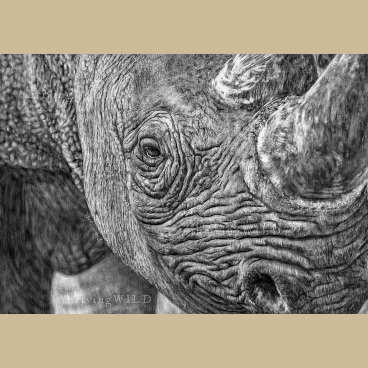 Rhino Wildlife Digital Drawing Procreate - The Thriving Wild