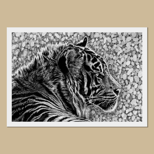 Taika the Tiger Art Prints - The Thriving Wildjpg
