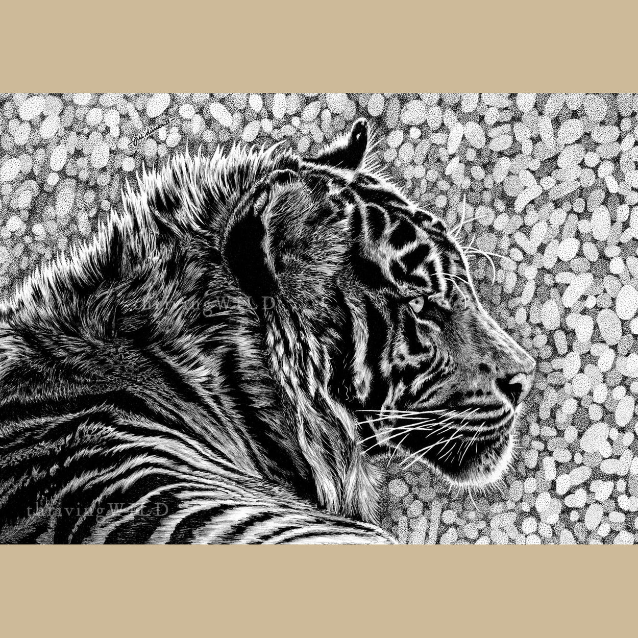 Tiger Pen Drawing - The Thriving Wild