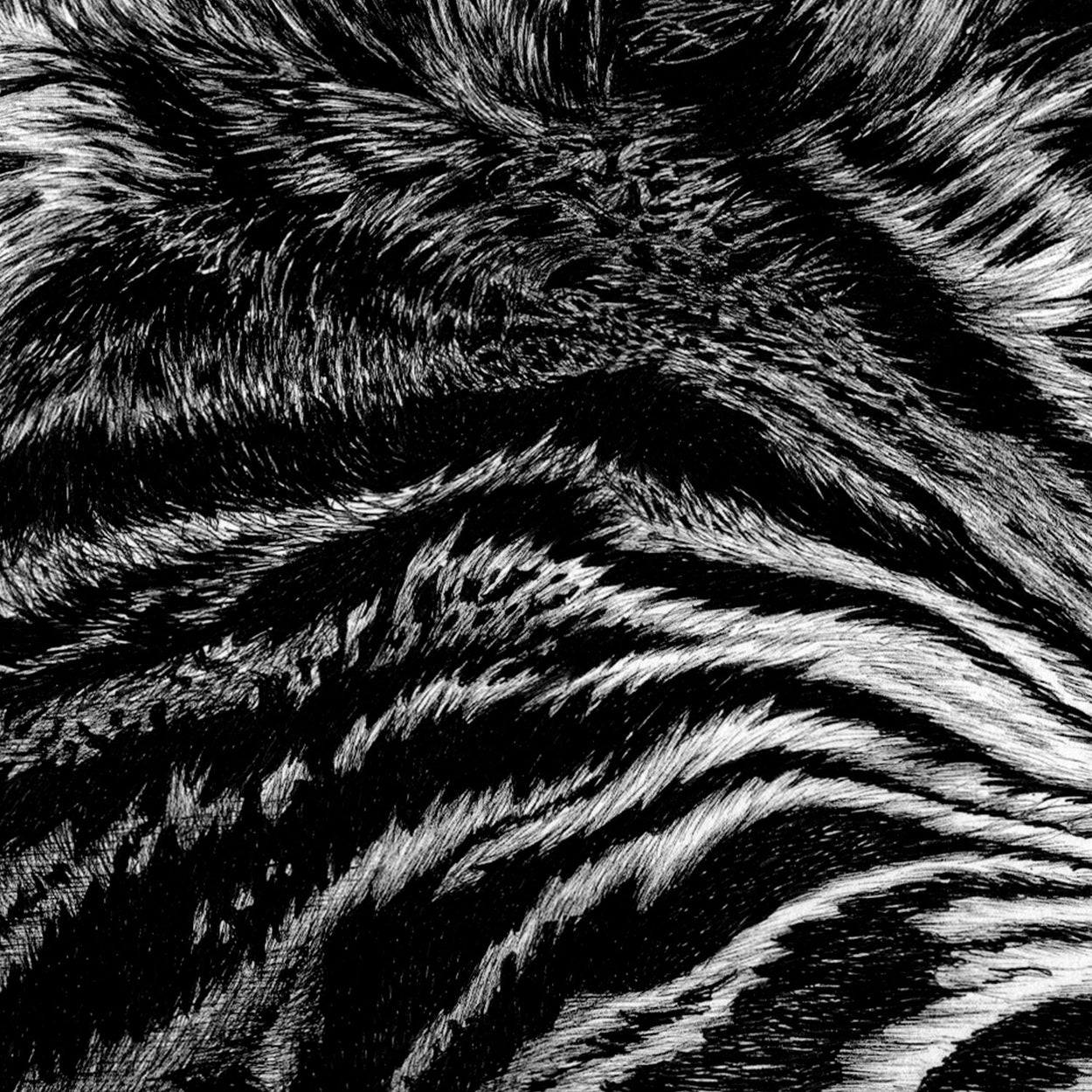 Tiger Pen Drawing Stripes Close-up - The Thriving Wild