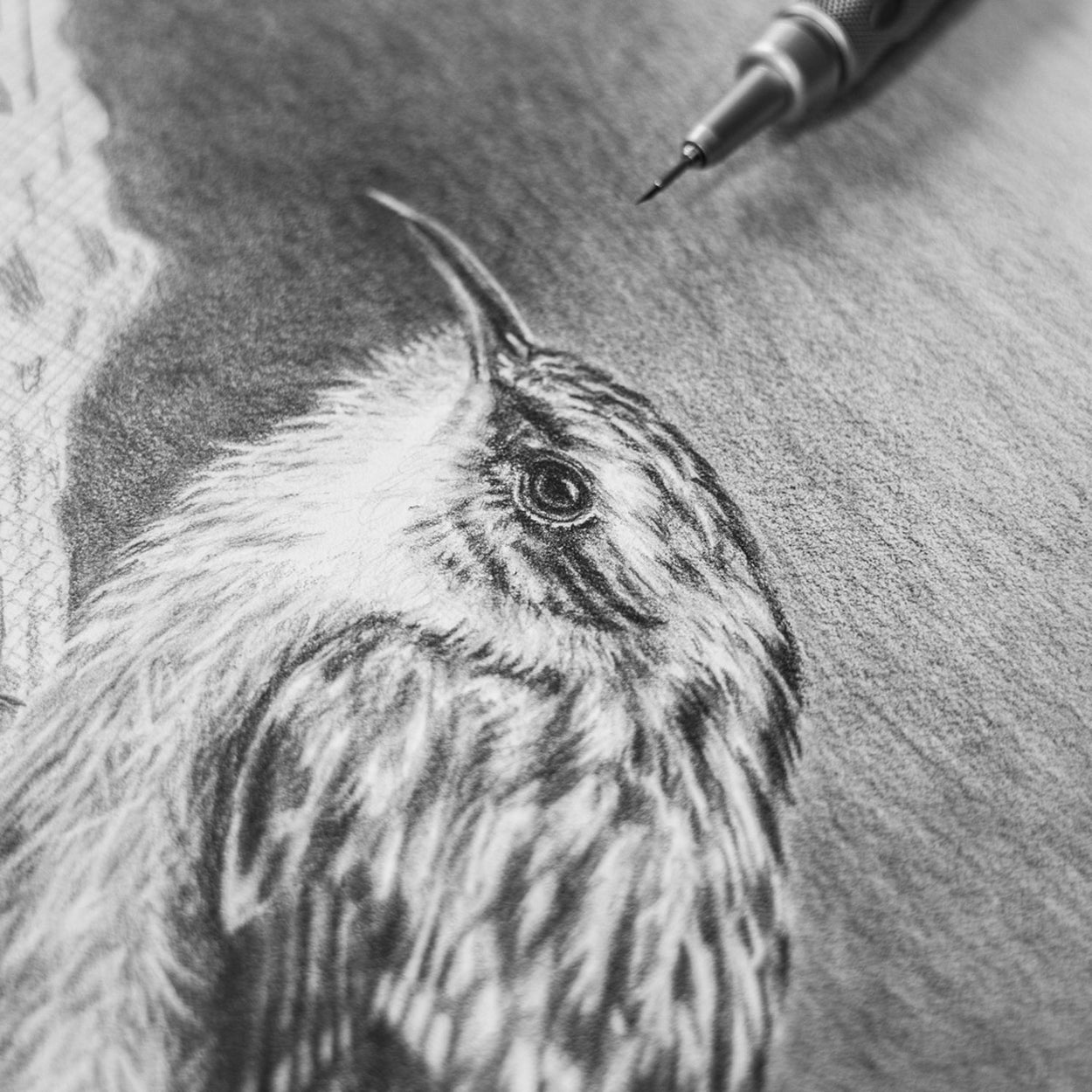 Treecreeper Progress with Pencil - The Thriving Wild