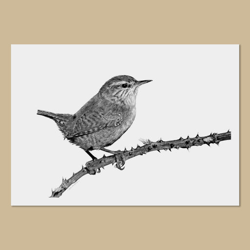 Wren Art Prints (B&W) - The Thriving Wild