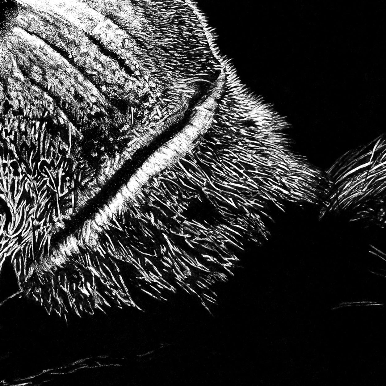 Wildlife Pen Drawing Close-up - The Thriving Wild