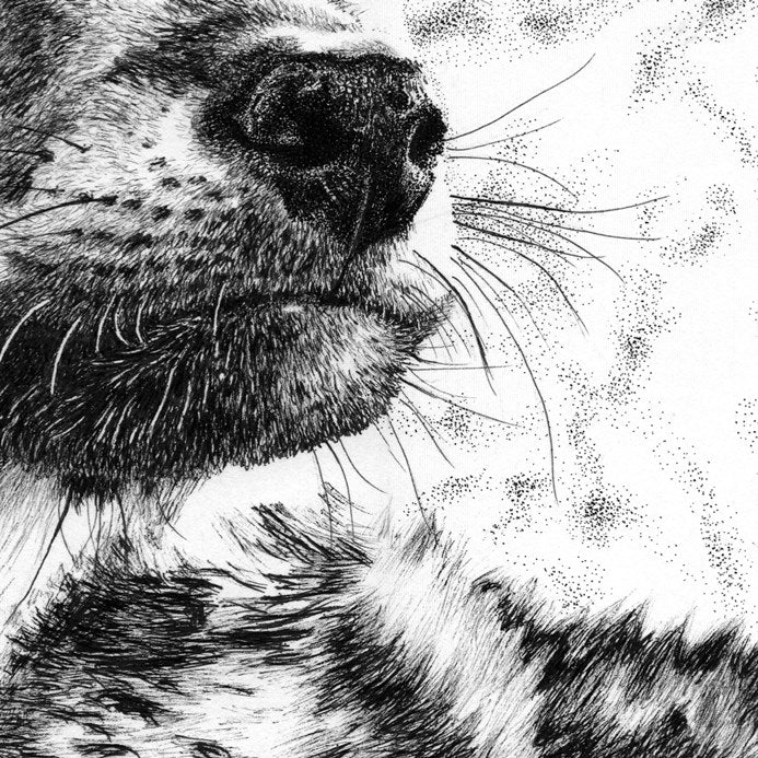 Wolf Cub Nose Close-up Pen Drawing - The Thriving Wild