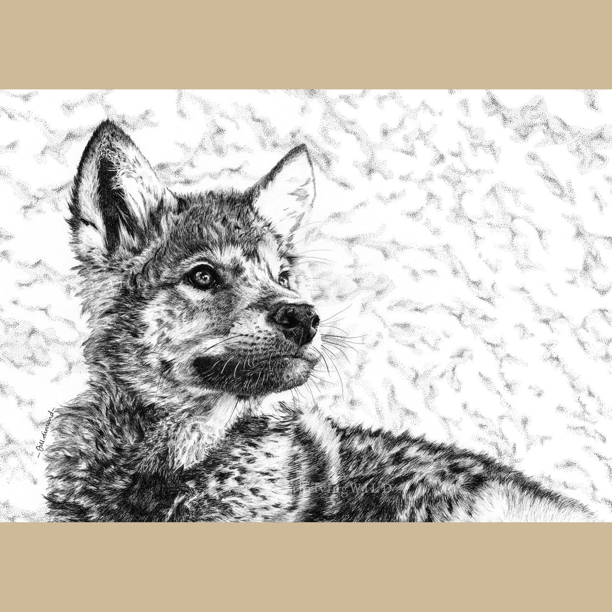 Wolf Cub Pen Drawing - The Thriving Wild