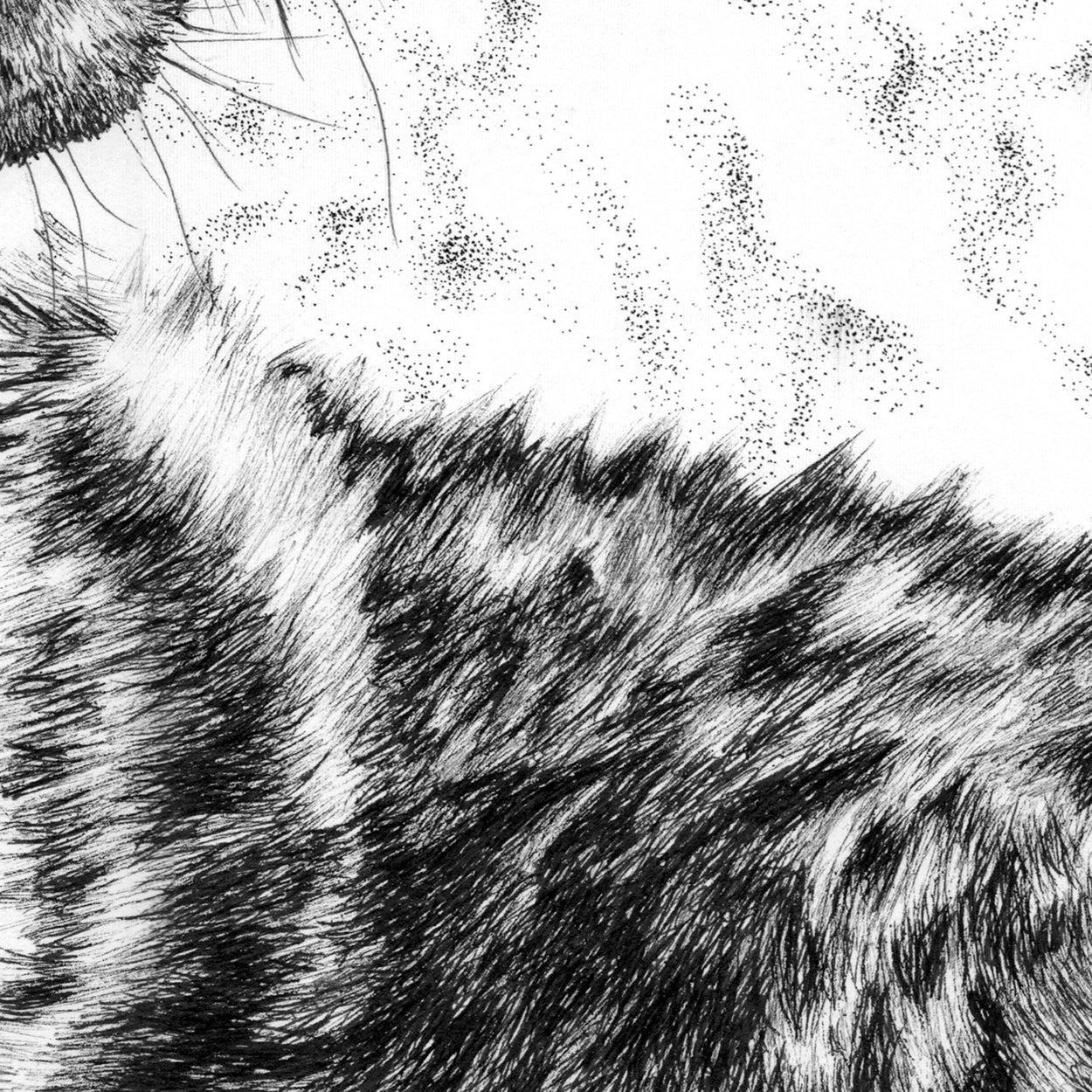 Wolf Pen Drawing Close-up - The Thriving Wild