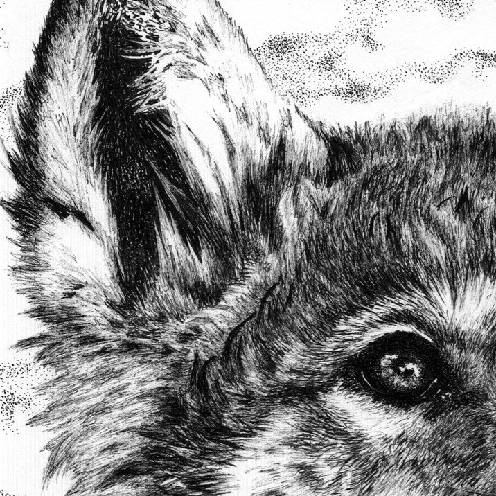 Wolf Pup Pen Drawing Close-up - The Thriving Wild