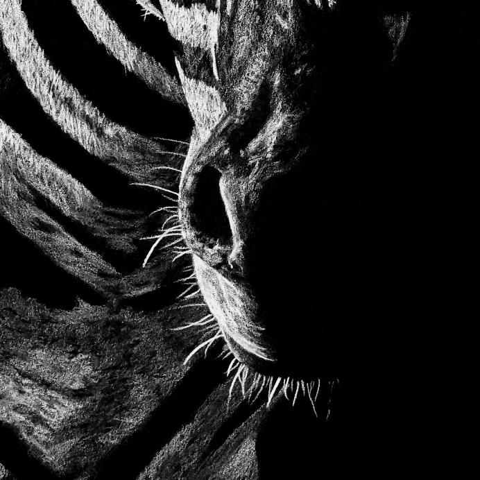 Zebra Drawing Face Close-up - The Thriving Wild