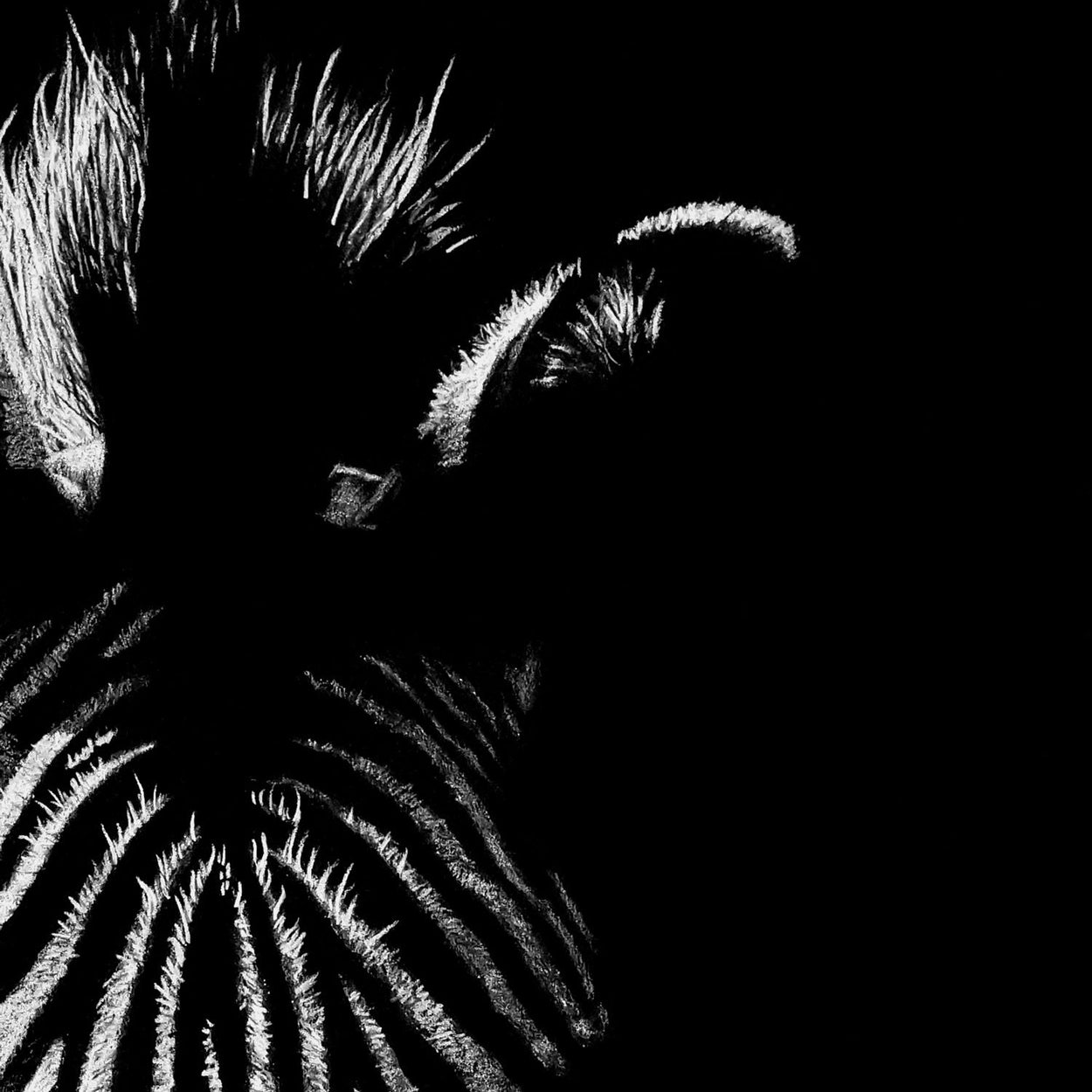 Zebra drawing close-up - The Thriving Wild