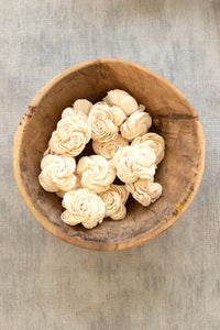 Dried Shell Flowers