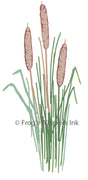 Frog's Whiskers Stamps - Bull Rushes