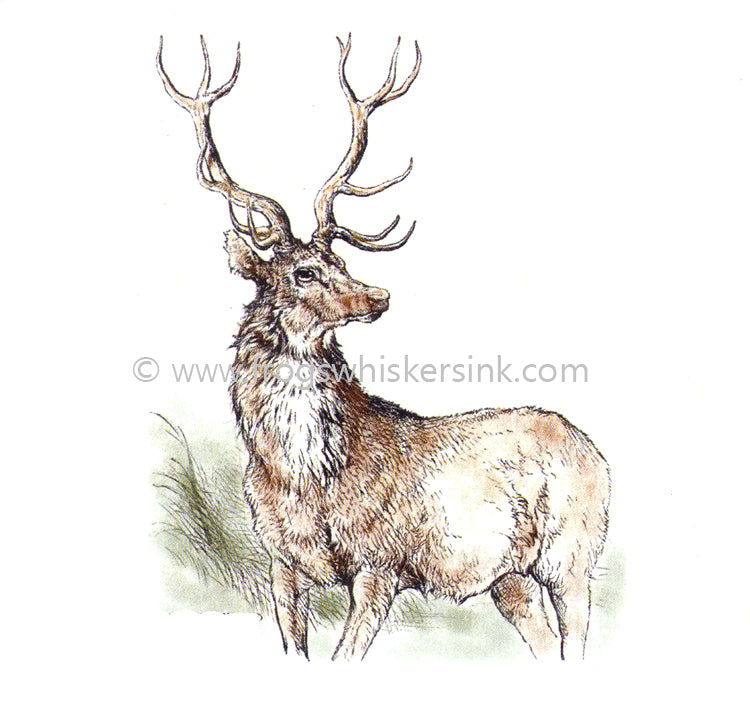 Frog's Whiskers Stamps - Highland Stag small