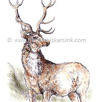 Frog's Whiskers Stamps - Highland Stag