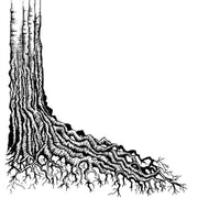 Lavinia Stamps - Tree Root