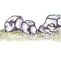 Frog's Whiskers Stamps - Rocks