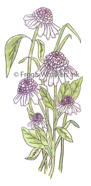 Frog's Whiskers Stamps - Cone Flower