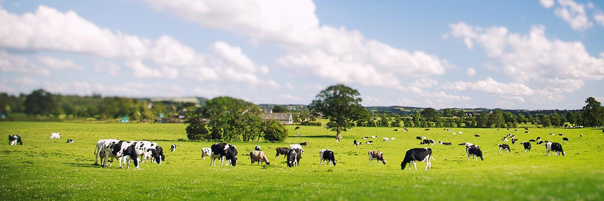 Byre is encouraging dairy farmers to diversify