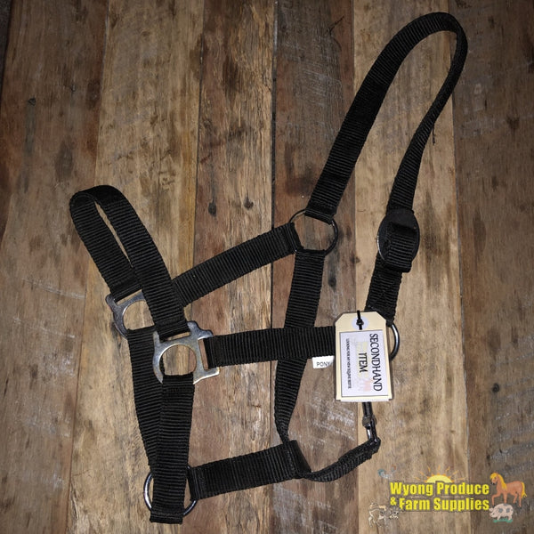 Halter Black Pony